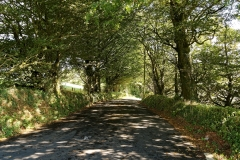 Tree Tunnel On Tor Lane